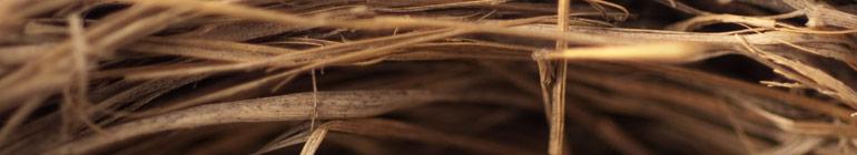 The Tangled Nest header image 3
