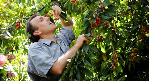 Cherry oh, cherry oh, baby.