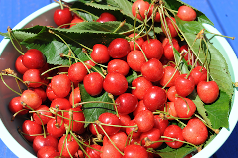 Life at the Tangled Nest is a bowl of cherries.