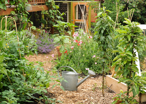 Don't know abou y'all, but I'm dreaming of summer.  It helps to keep the summer garden in mind, when doing the winter chores...