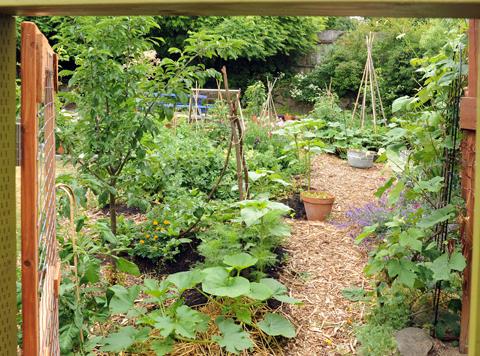 GardenCoopDoorBest
