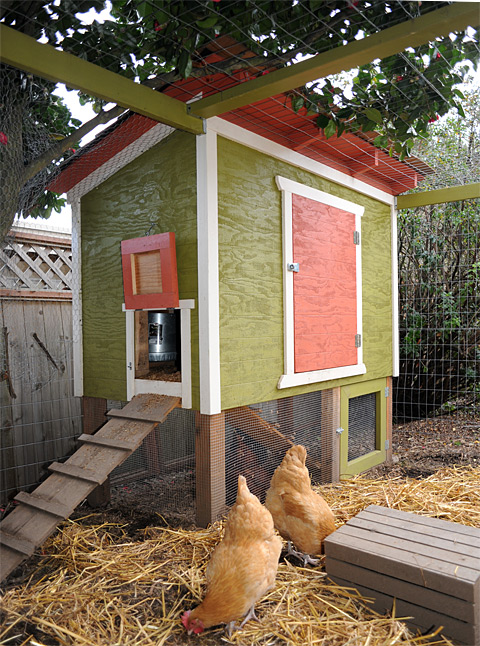our urban chicken coop plan