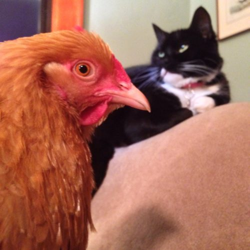 Delilah was not impressed to have to share the house with Ophelia while she recovered.