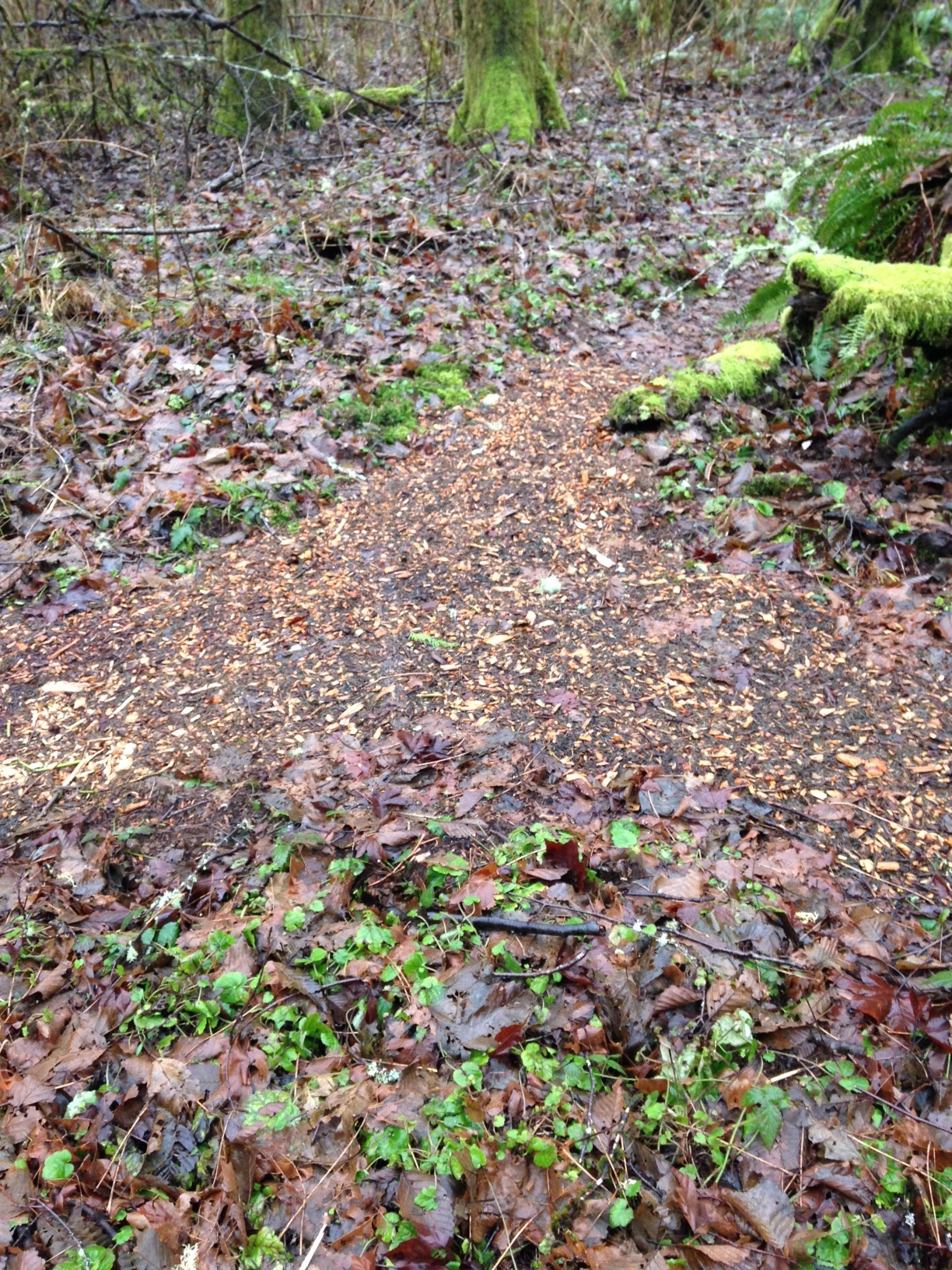 priory path jpg